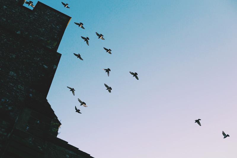 Arundel Castle birds fly over