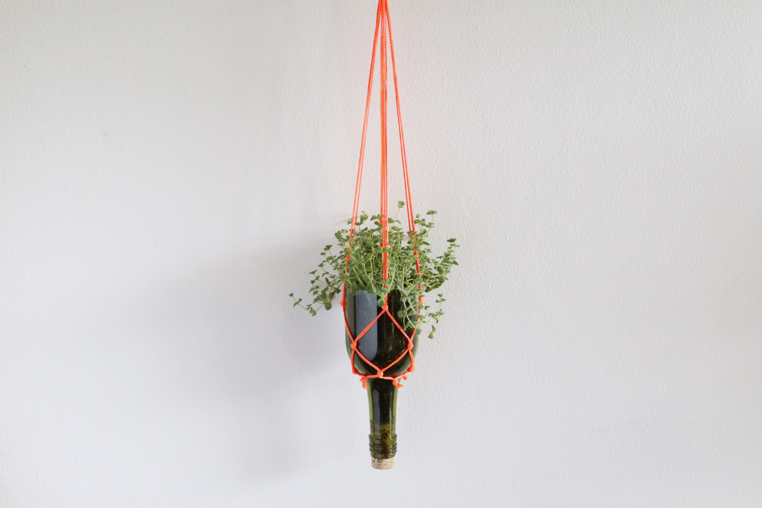 We Are Wild Recycled Wine Bottle hanging planter